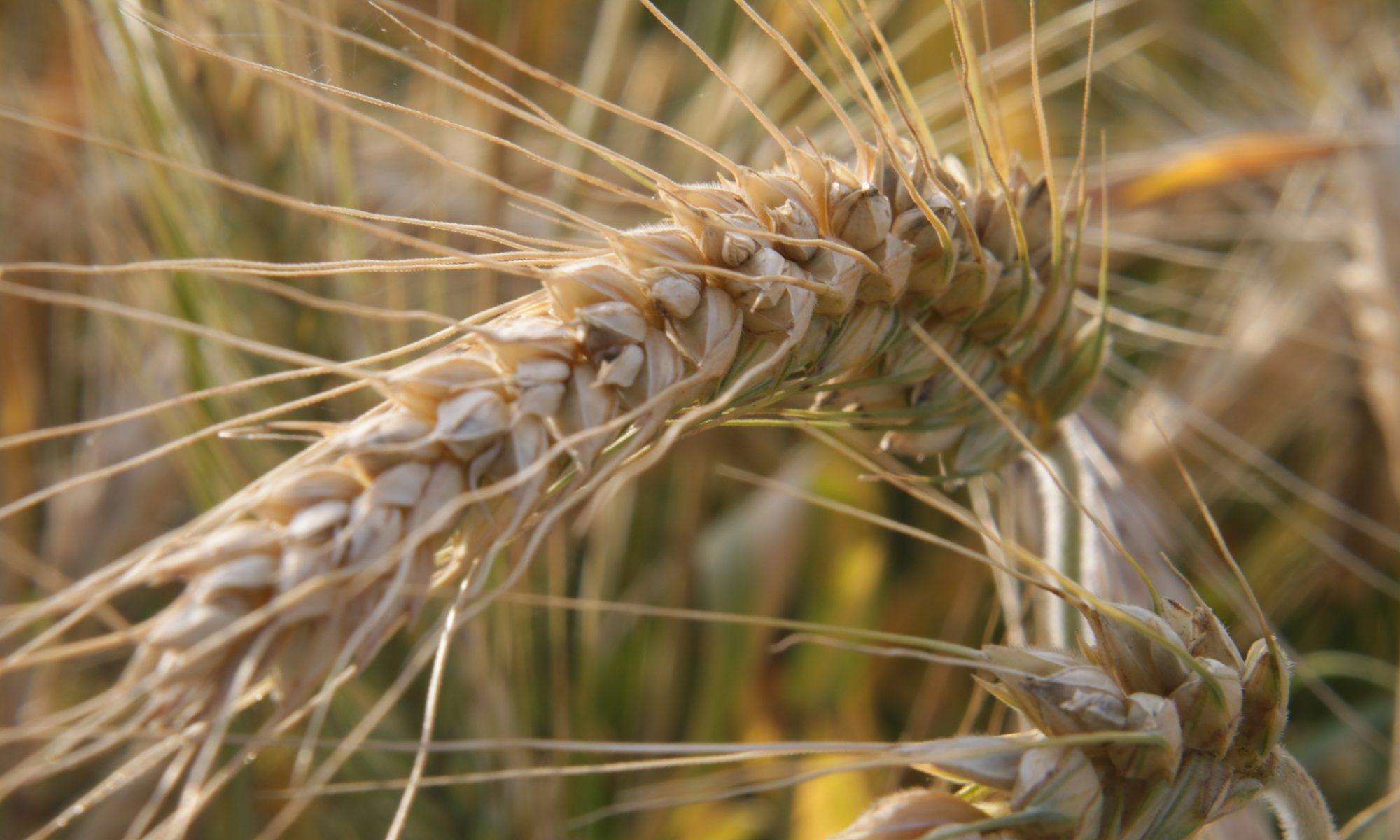 Bauernbund Feistritz am Wechsel